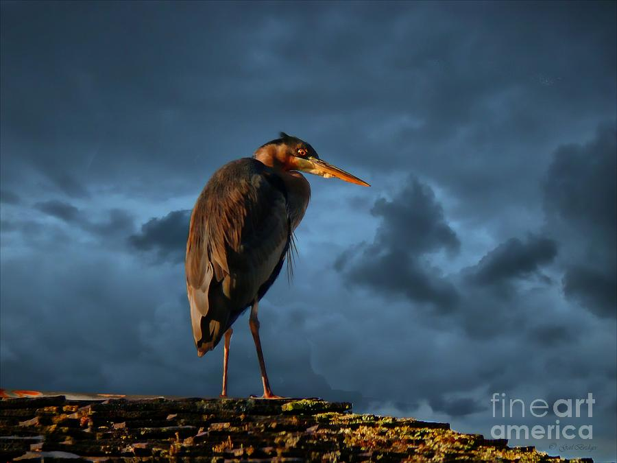 Blue Heron Mixed Media - The Rooftop Watcher by Gail Bridger