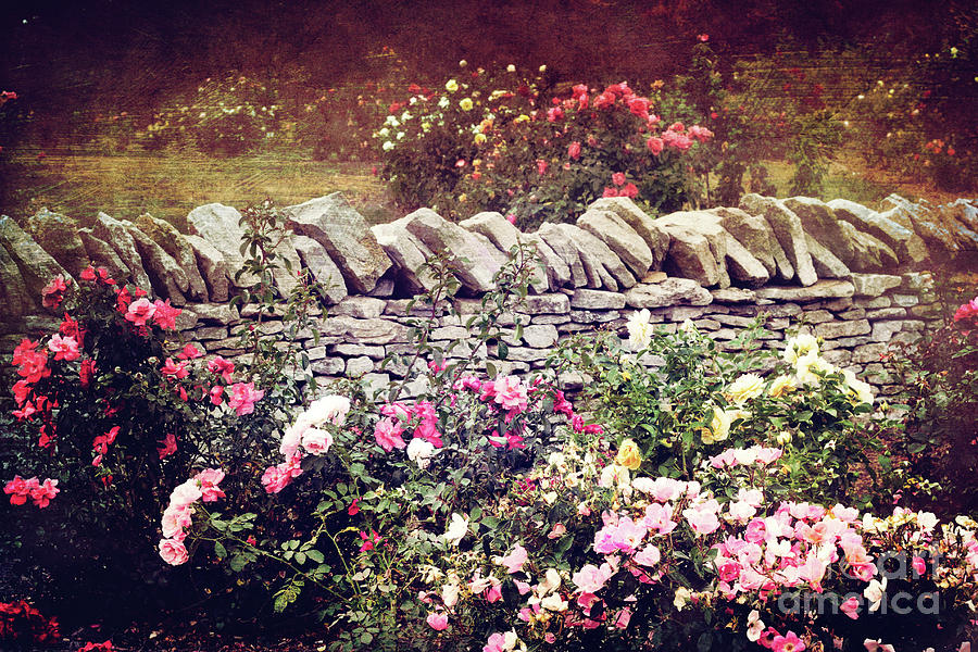 Rose Photograph - The Rose Garden by Stephanie Frey