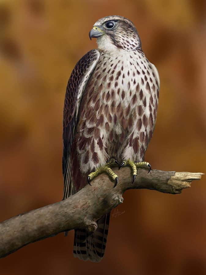 Saker Falcon Digital Art - The Saker Falcon by Deak Attila