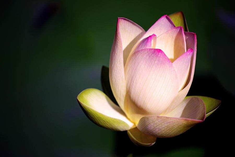 Flower Photograph - The Silent One by Melanie Moraga