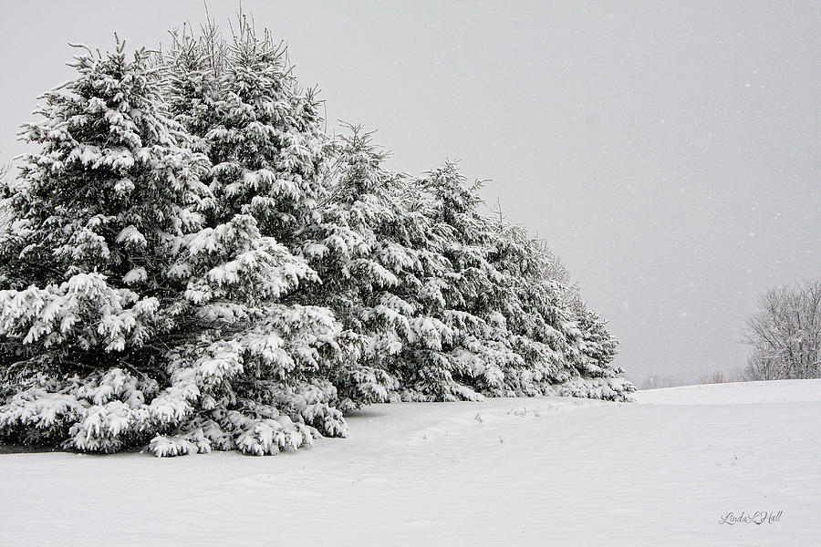 Winter Photograph - The Simple Beauty of Winter by Linda Lee Hall