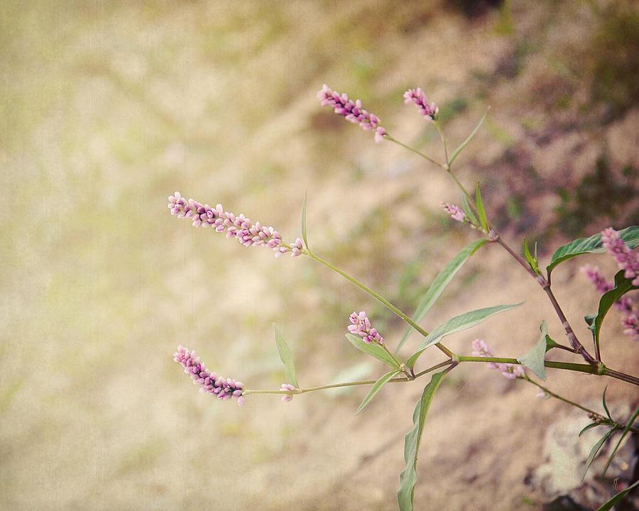 Romantic Photograph - The Simple Things by Jai Johnson