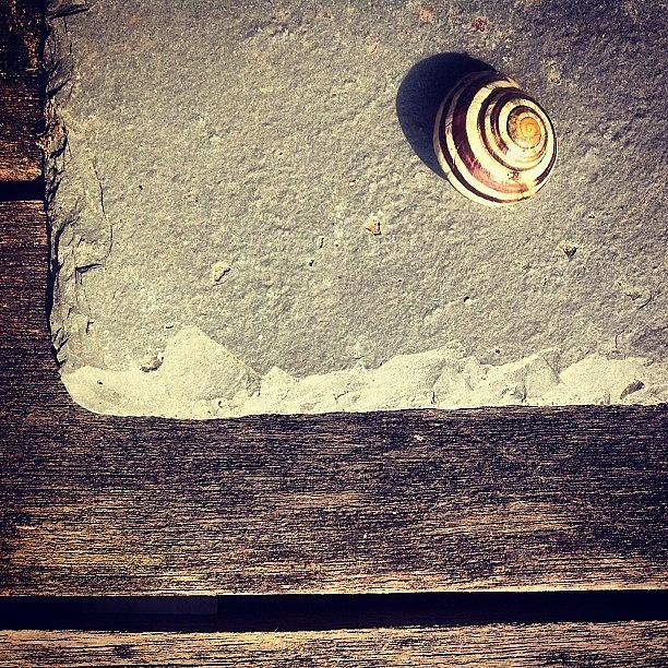 Snail Photograph - The Snail by Nic Squirrell
