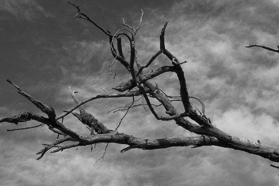 Tree Photograph - The Spectre Of Drought by David Rizzo