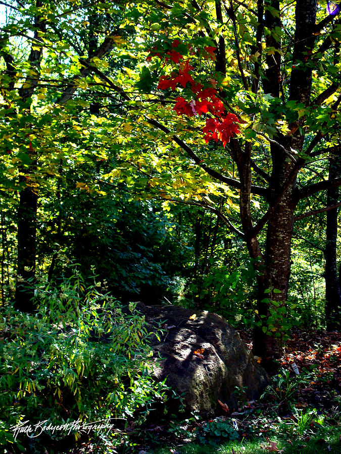 Landscape Photograph - The Start Of Fall Color by Ruth Bodycott