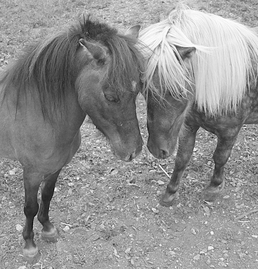 Horses Photograph - The Studs by Heather  Boyd