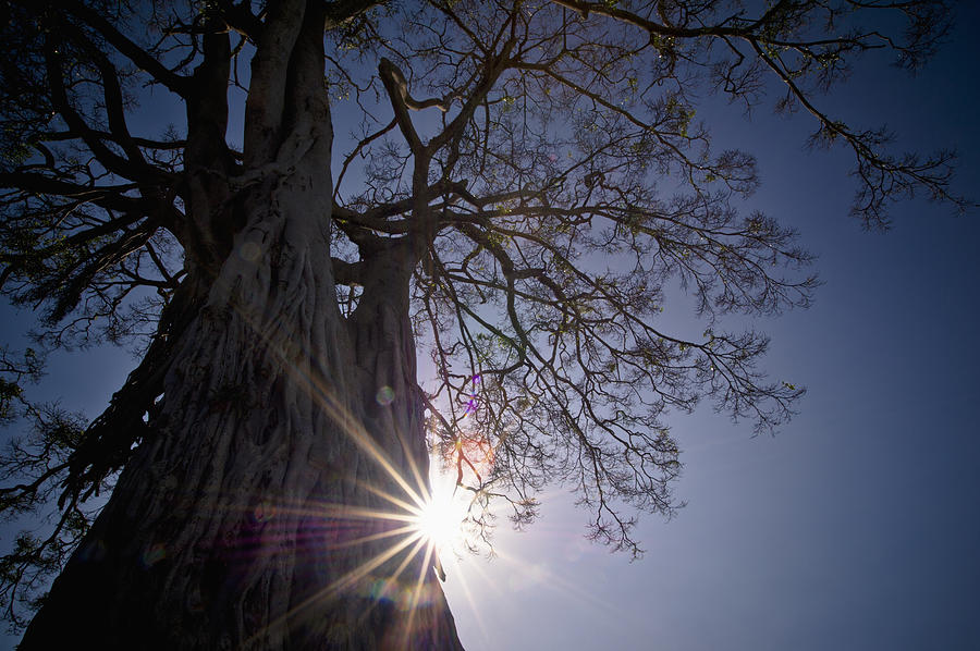 Blue Sky Photograph - The Sunlight Shines Behind A Tree Trunk by David DuChemin