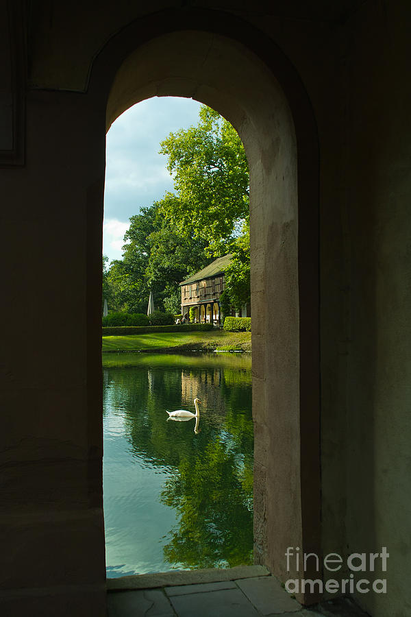 The Swan by Pit Hermann