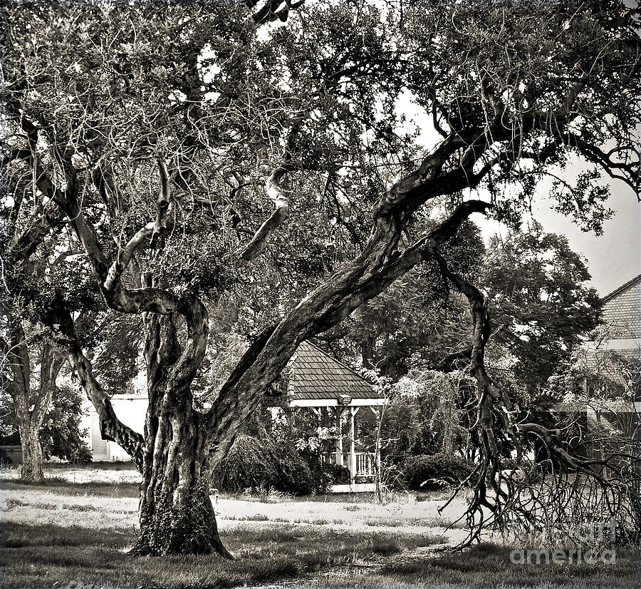 Tree Photograph - The Tree Which Moves ... by Gwyn Newcombe