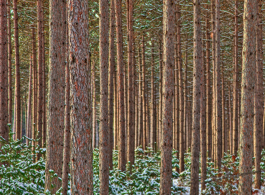 Trees Photograph - The Trees by David Wynia
