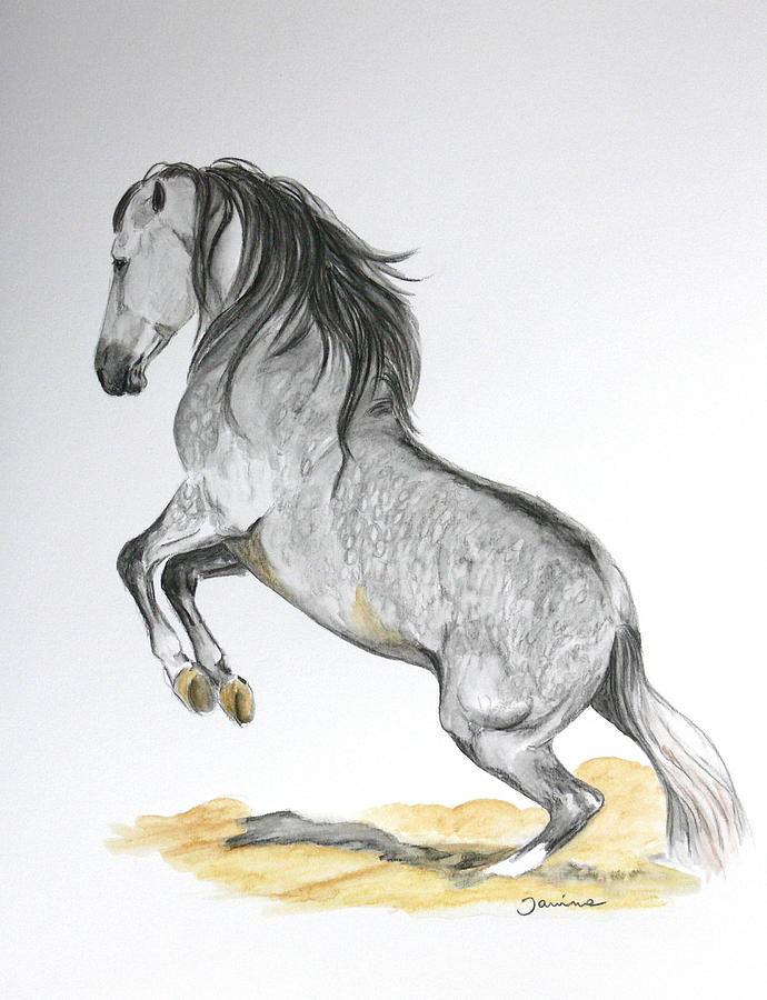 Andalusian Horse Painting - The Turn by Janina  Suuronen