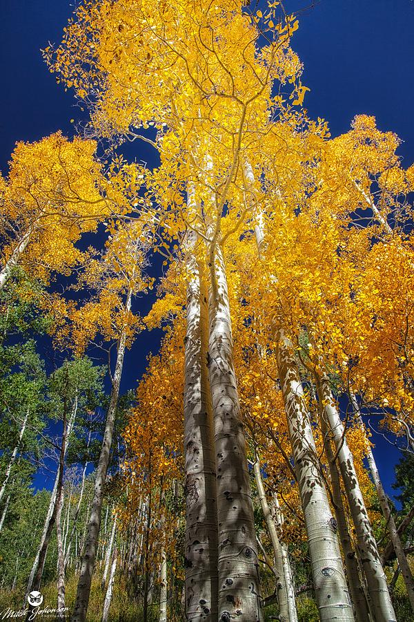 Autumn Photograph - The Two Split Trees by Mitch Johanson