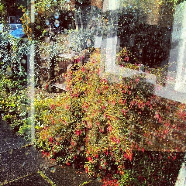Beautiful Photograph - The View From My Window, #cambridge #uk by Abdelrahman Alawwad