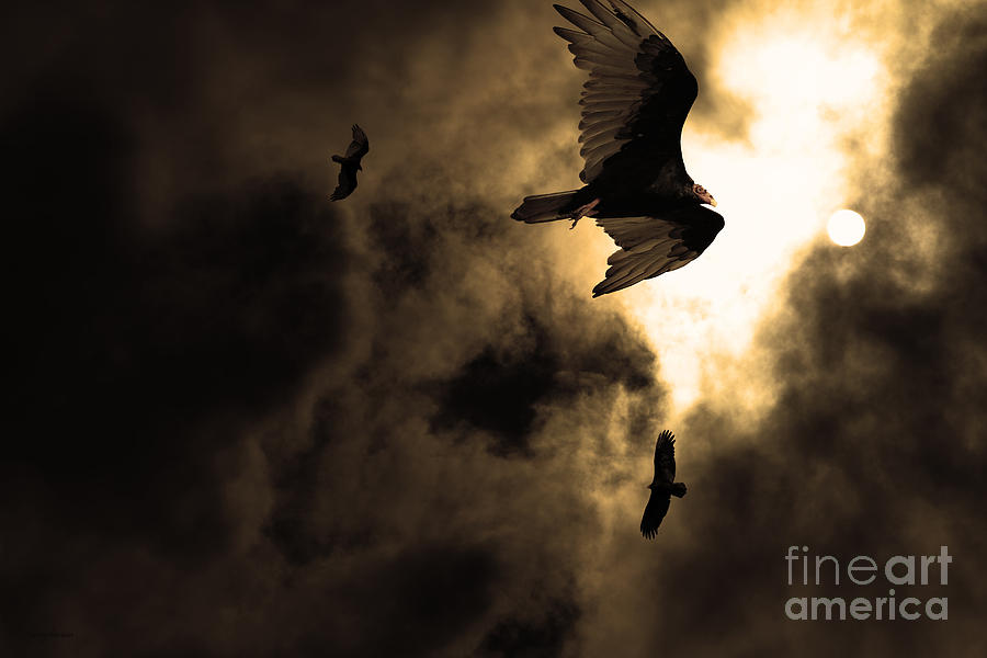 Bird Photograph - The Vultures Have Gathered In My Dreams . Version 2 . Golden by Wingsdomain Art and Photography
