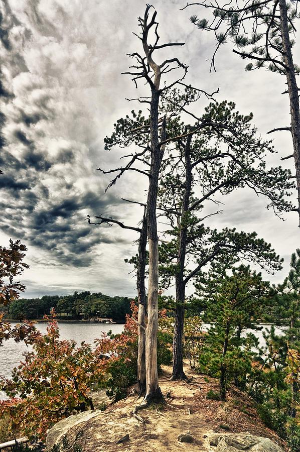 Lake Photograph - The Walk by Edward Myers