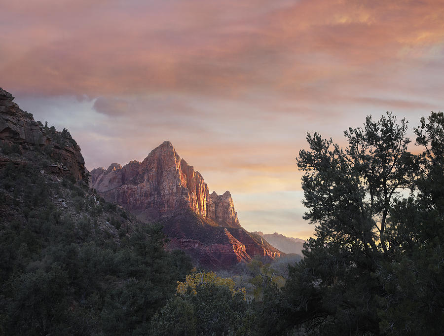 The Watchman Zion National Park Utah Photograph by Tim Fitzharris