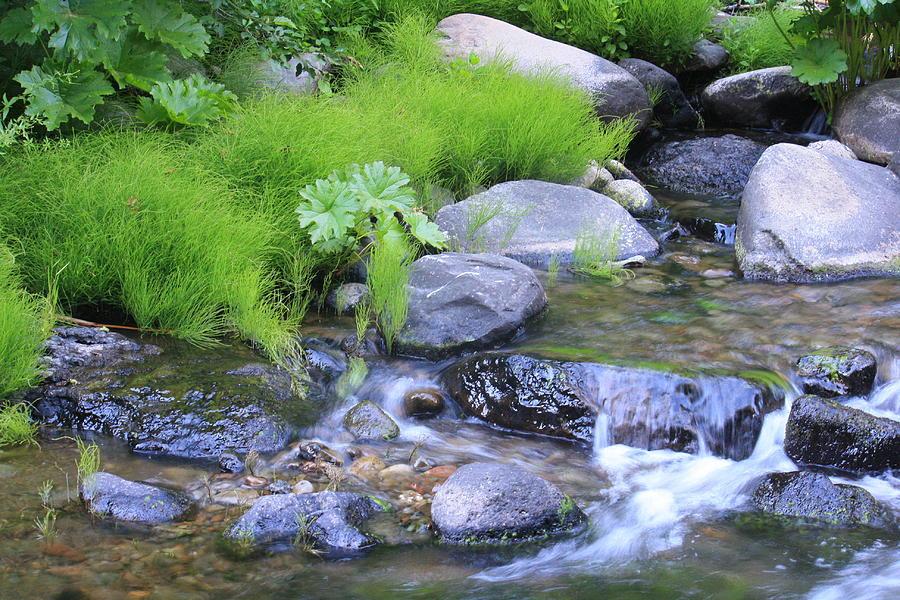 Creek Photograph - The Waterfall by Nance Eakins