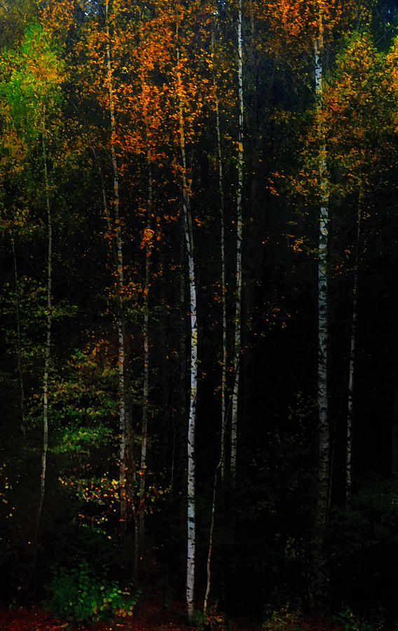 Autumn Photograph - The Way To Glow From The Darkness by Jenny Rainbow