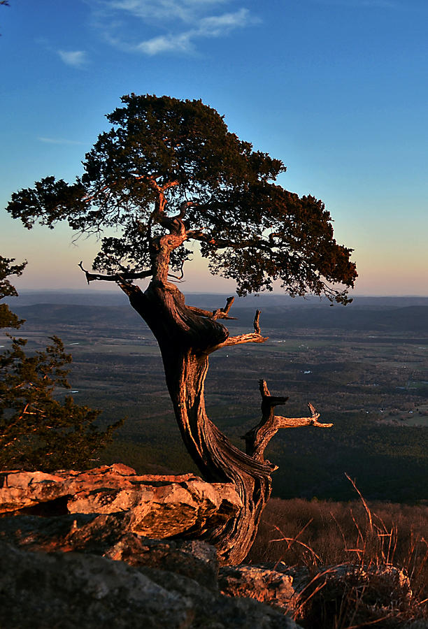 Arkansas Photograph - The Weathered Watcher by Jeff Rose