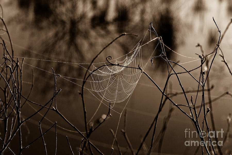 Web Photograph - The Web by John Stanisich
