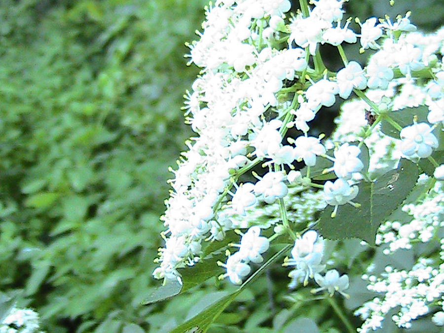 Pretty Flowers Photograph - The White Bloom by Rachel Snell