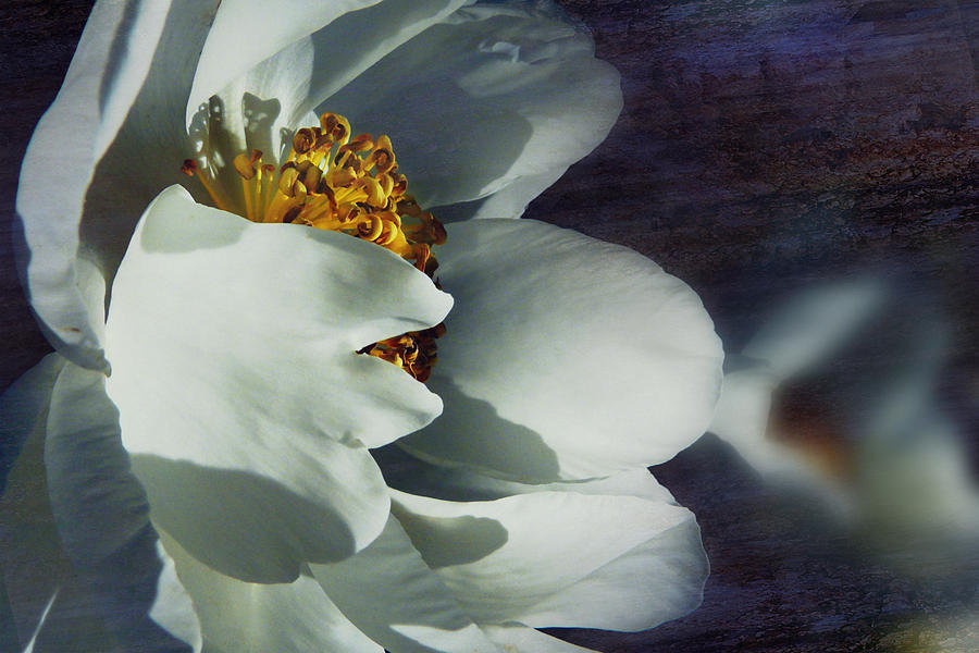 Shot Photograph - The White Of Summer by Florin Birjoveanu