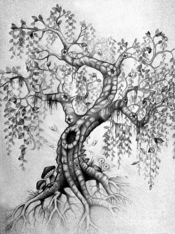 Tree Drawing - The Willow by Melissa Senesac
