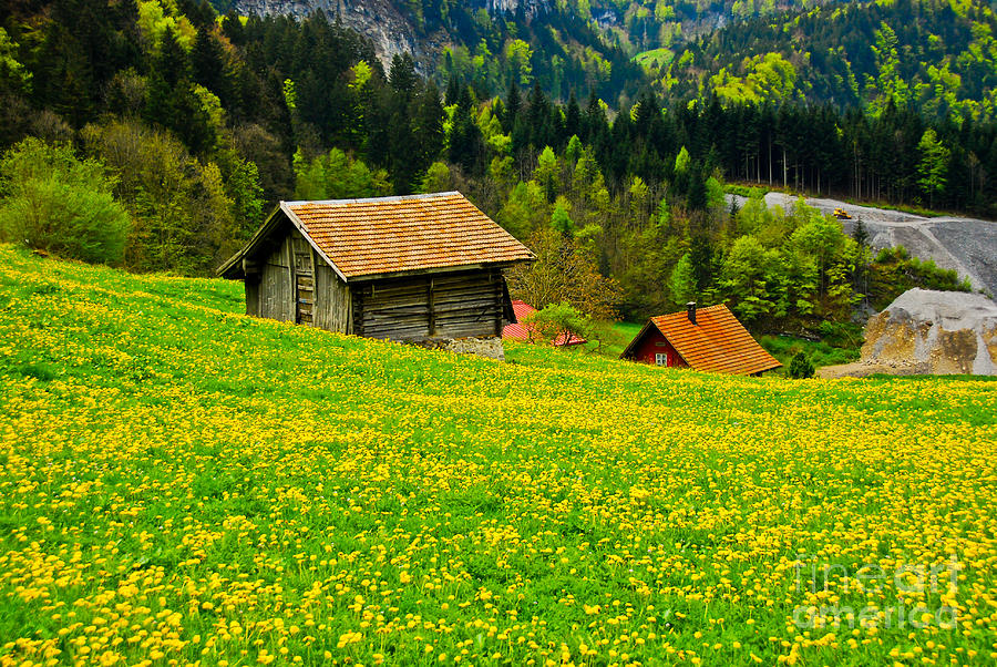 Old Photograph - The Yellow Around by Syed Aqueel