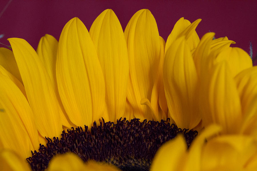 Blatt Photograph - The Yellow Blossom Leaves by Andreas Levi