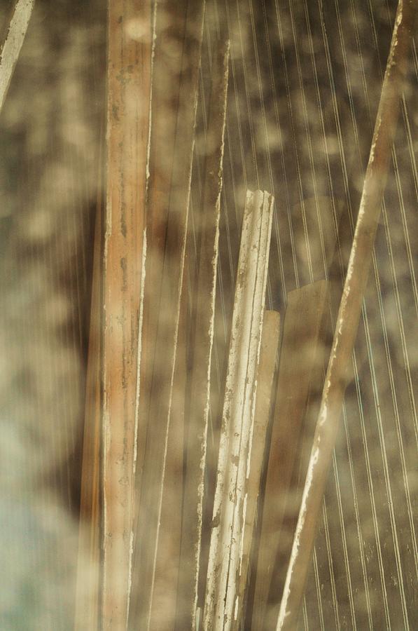 Wood Abstract Photograph - Thin Veil by Todd Sherlock