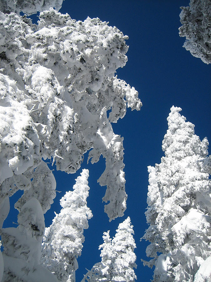 Snow Photograph - Things Are Looking Up by George Crawford