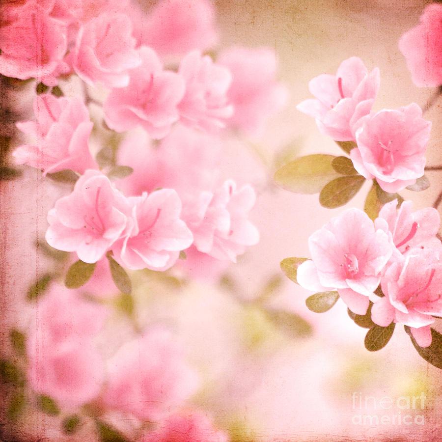 Pink Azalea Photograph - Think Spring by Kim Fearheiley