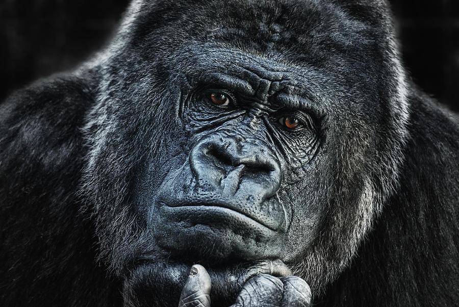 Hominidae Photograph - thinking about U by Joachim G Pinkawa