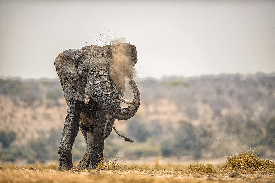 Chobe Photograph - This Is Botswana No.  8 - Feels So Good by Paul W Sharpe Aka Wizard of Wonders