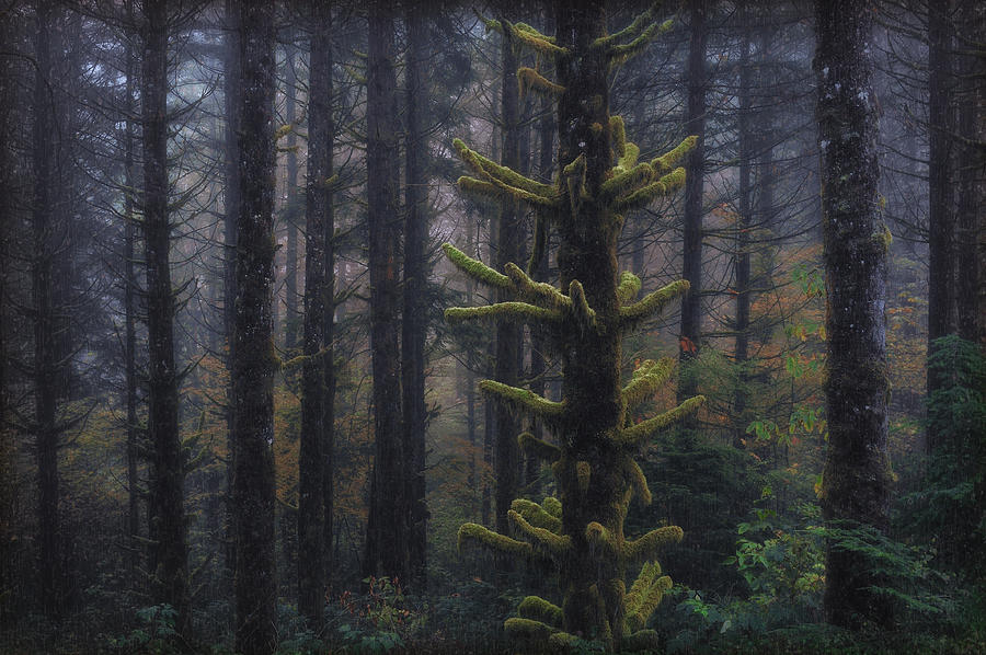 Forest Photograph - This Is British Columbia No.54 - Misty Mystical Moss Forest II by Paul W Sharpe Aka Wizard of Wonders