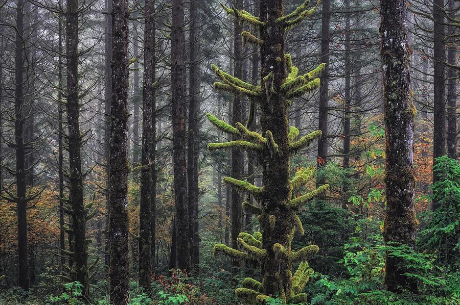 Forest Photograph - This Is British Columbia No.54f - Misty Mystical Moss Forest IIi by Paul W Sharpe Aka Wizard of Wonders