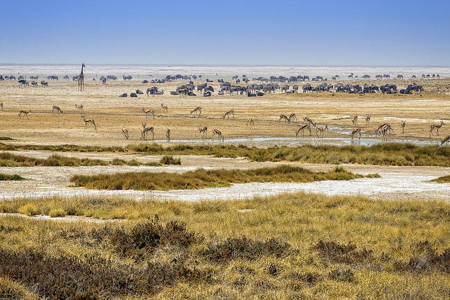 Etosha Pan Photograph - This Is Namibia No.  1 - Waterhole At Etosha Pan by Paul W Sharpe Aka Wizard of Wonders