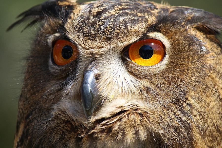Owl Photograph - Those Eyes by Paulette Thomas