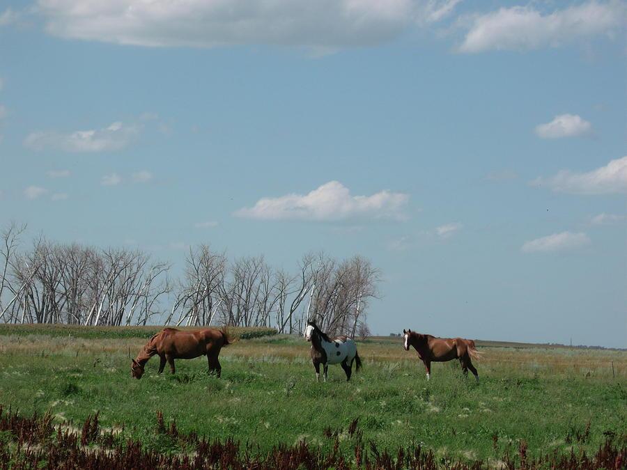 Horses Photograph - Three Horse Ranch by Brian  Maloney