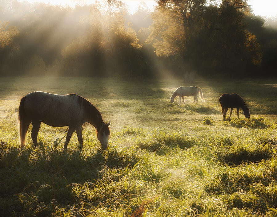 Equine Photograph - Three Horse Sunrise by Ron  McGinnis