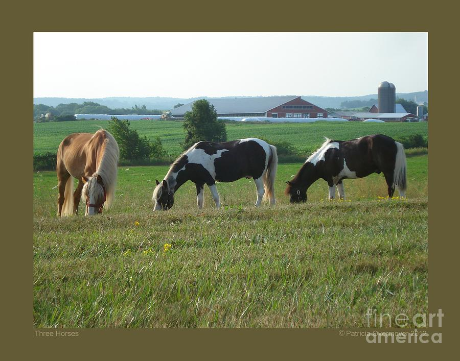 Horse Photograph - Three Horses by Patricia Overmoyer