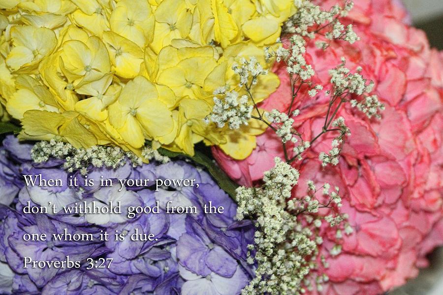 Three hydrangea flowers proverbs 3v27 photograph by linda phelps scripture photograph three hydrangea flowers proverbs 3v27 by linda phelps mightylinksfo