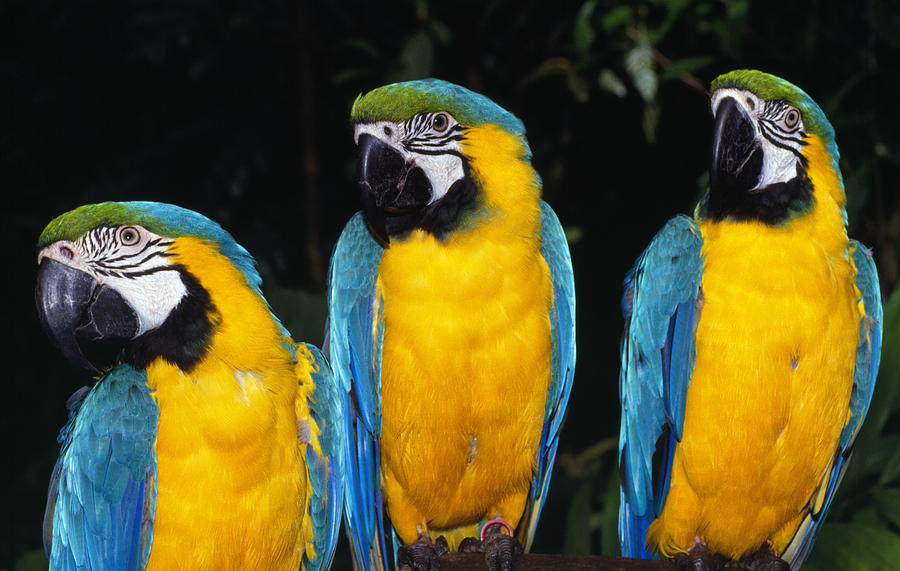 Outdoors Photograph - Three Parrots by Natural Selection Ralph Curtin