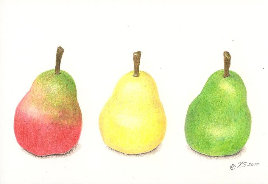 Three Pears Drawing by Xenia Sease - 41.9KB