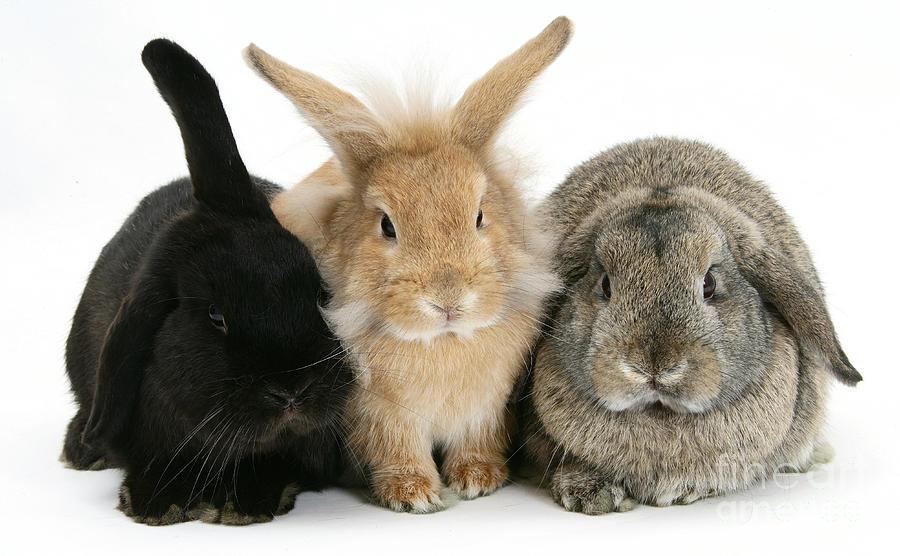 Жилет из кролика рекса фото тратить деньги