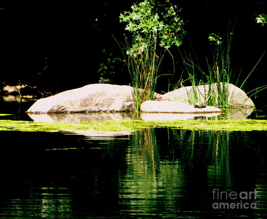 Rocks Photograph - Three Rocks And A Turtle by Maria Scarfone