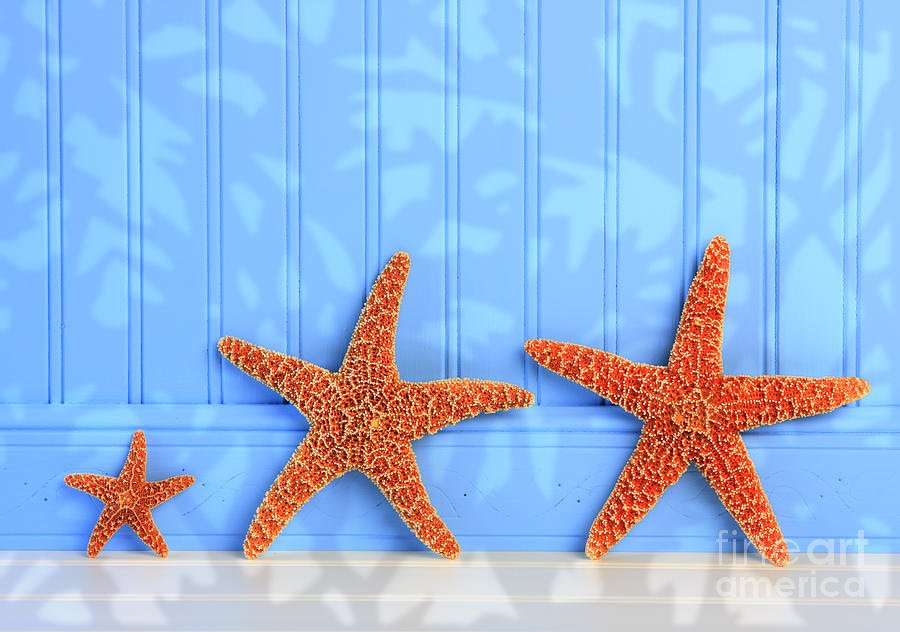 Three Starfish On Blue Background Photograph By Susan Mckenzie