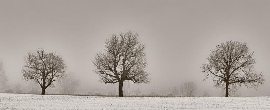 Winter Photograph - Three Trees by Brian Mollenkopf