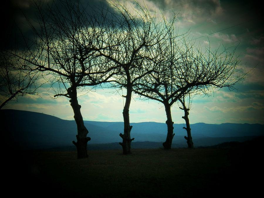 West Virginia Photograph - Three Trees by Joyce Kimble Smith