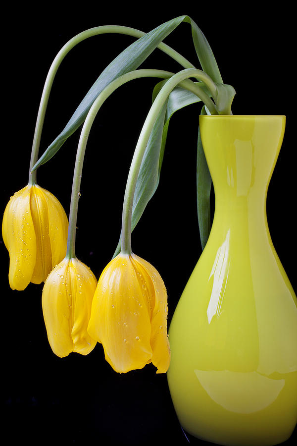 Tulip Photograph - Three Yellow Tulips by Garry Gay